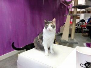 La Gatoteca - Cat Café