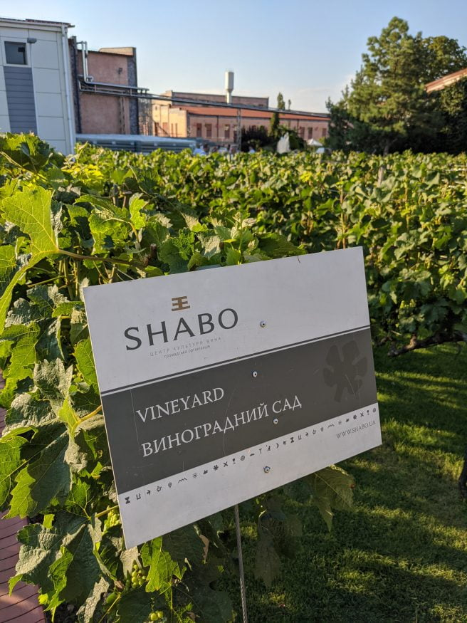 Shabo Vineyard
