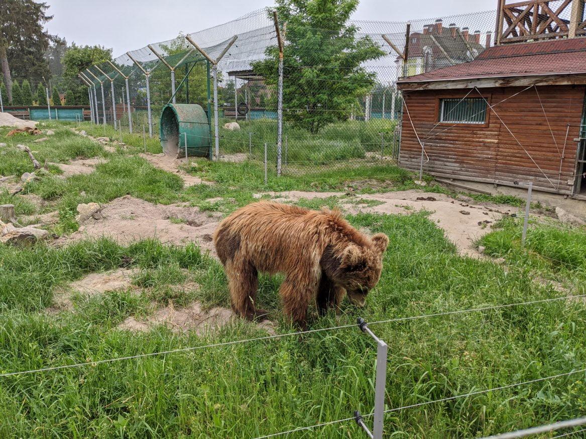 Zhytomyr Bear Sanctuary